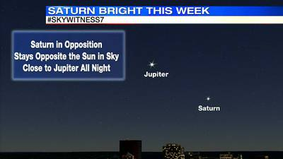 Saturn is extra bright this week