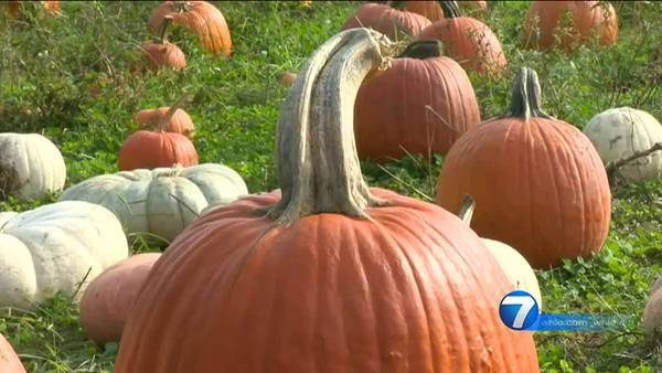 Tips for recycling your old carved jack-o-lanterns