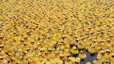 Rubber Duck Regatta winners announced