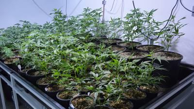 Is Ohio ready for recreational marijuana?