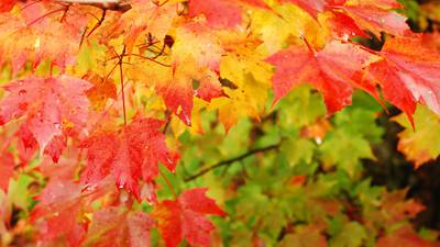 Fall color continues to develop
